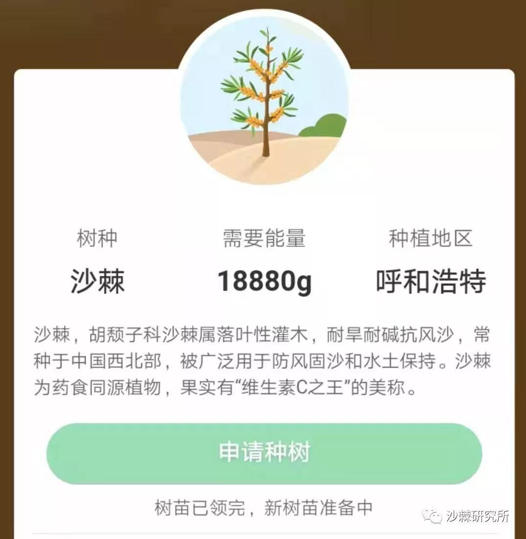 植树节,跟着阿里巴巴种沙棘